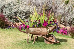 New use for an old wheelbarrow - a planter with colorful flowers