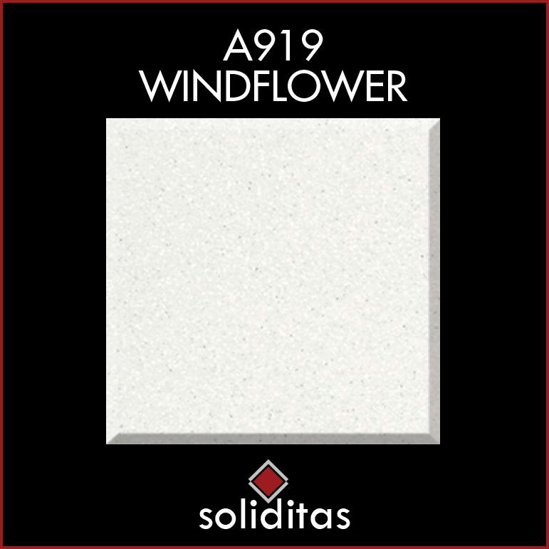 A919WINDFLOWER